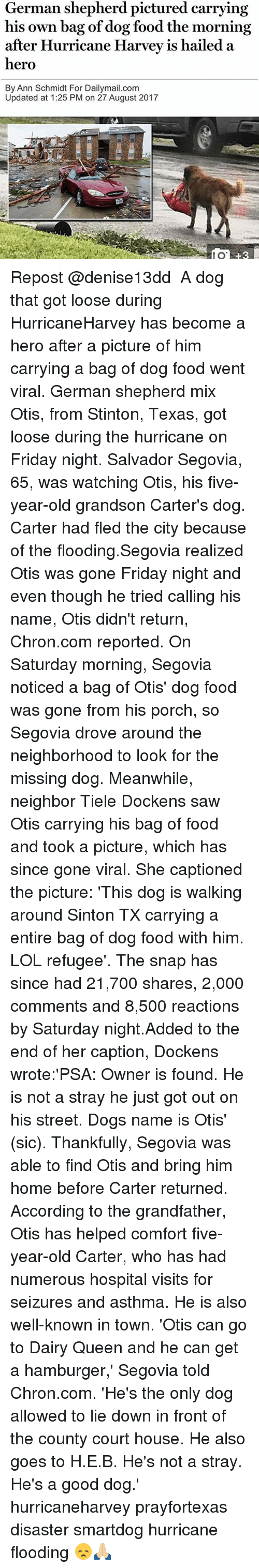 courting: German shepherd pictured carrying  his own bag of dog food the morning  after Hurricane Harvev is hailed a  hero  By Ann Schmidt For Dailymail.com  Updated at 1:25 PM on 27 August 2017  80  8 Repost @denise13dd ・・・ A dog that got loose during HurricaneHarvey has become a hero after a picture of him carrying a bag of dog food went viral. German shepherd mix Otis, from Stinton, Texas, got loose during the hurricane on Friday night. Salvador Segovia, 65, was watching Otis, his five-year-old grandson Carter's dog. Carter had fled the city because of the flooding.Segovia realized Otis was gone Friday night and even though he tried calling his name, Otis didn't return, Chron.com reported. On Saturday morning, Segovia noticed a bag of Otis' dog food was gone from his porch, so Segovia drove around the neighborhood to look for the missing dog. Meanwhile, neighbor Tiele Dockens saw Otis carrying his bag of food and took a picture, which has since gone viral. She captioned the picture: 'This dog is walking around Sinton TX carrying a entire bag of dog food with him. LOL refugee'. The snap has since had 21,700 shares, 2,000 comments and 8,500 reactions by Saturday night.Added to the end of her caption, Dockens wrote:'PSA: Owner is found. He is not a stray he just got out on his street. Dogs name is Otis' (sic). Thankfully, Segovia was able to find Otis and bring him home before Carter returned. According to the grandfather, Otis has helped comfort five-year-old Carter, who has had numerous hospital visits for seizures and asthma. He is also well-known in town. 'Otis can go to Dairy Queen and he can get a hamburger,' Segovia told Chron.com. 'He's the only dog allowed to lie down in front of the county court house. He also goes to H.E.B. He's not a stray. He's a good dog.' hurricaneharvey prayfortexas disaster smartdog hurricane flooding 😞🙏🏼