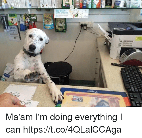 MêMes: Get it checkod Ma'am I'm doing everything I can https://t.co/4QLalCCAga