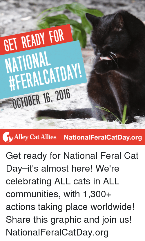 alley cats: GET READY FOR  NATIONAL  DAY!  Alley cat Allies NationalFeralcatDay.org Get ready for National Feral Cat Day–it's almost here! We're celebrating ALL cats in ALL communities, with 1,300+ actions taking place worldwide! Share this graphic and join us! NationalFeralCatDay.org