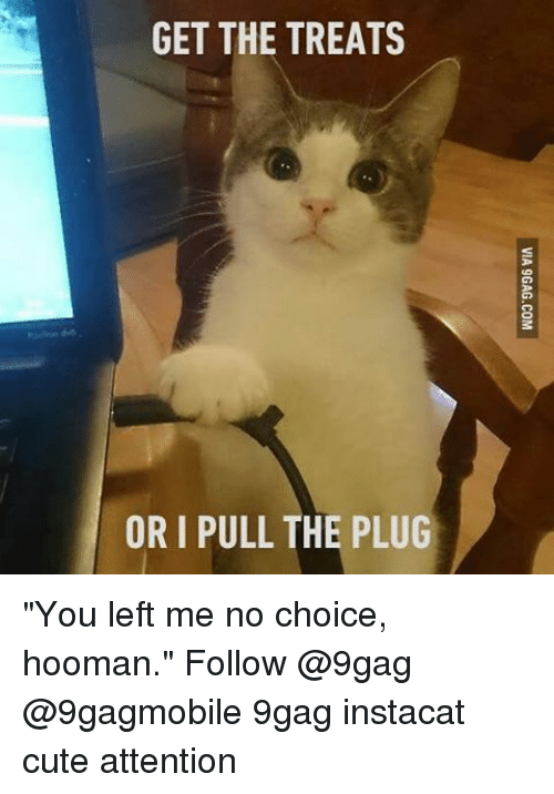 """Attentation: GET THE TREATS  ORI PULL THE PLUG """"You left me no choice, hooman."""" Follow @9gag @9gagmobile 9gag instacat cute attention"""