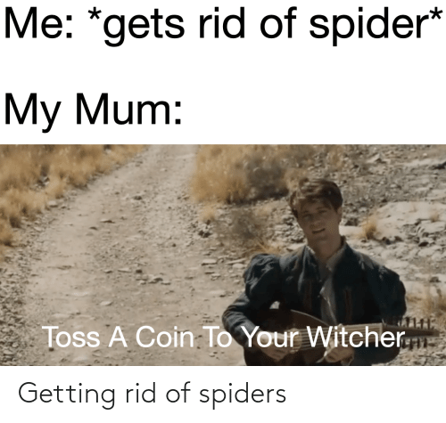 Spiders: Getting rid of spiders