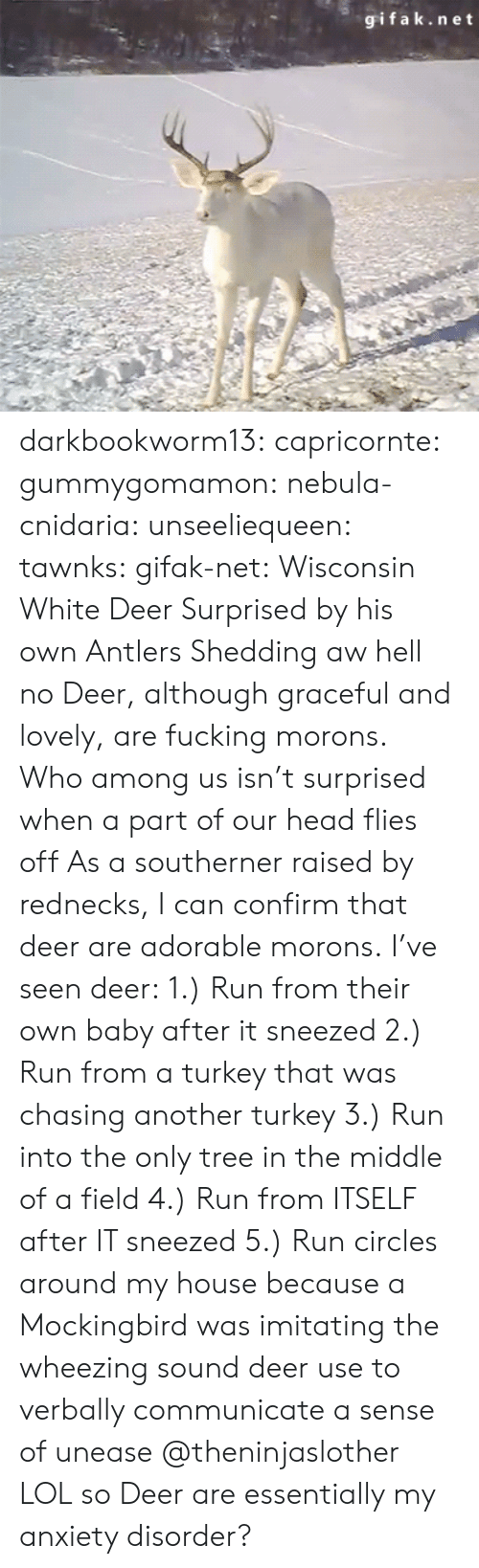 mockingbird: gifak.net darkbookworm13:  capricornte:  gummygomamon:  nebula-cnidaria:  unseeliequeen:  tawnks:  gifak-net:  Wisconsin White Deer Surprised by his own Antlers Shedding   aw hell no  Deer, although graceful and lovely, are fucking morons.   Who among us isn't surprised when a part of our head flies off   As a southerner raised by rednecks, I can confirm that deer are adorable morons. I've seen deer: 1.) Run from their own baby after it sneezed 2.) Run from a turkey that was chasing another turkey 3.) Run into the only tree in the middle of a field 4.) Run from ITSELF after IT sneezed 5.) Run circles around my house because a Mockingbird was imitating the  wheezing sound deer use to verbally communicate a sense of unease   @theninjaslother  LOL so Deer are essentially my anxiety disorder?
