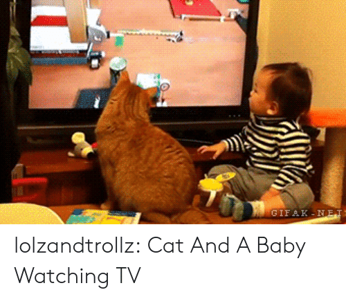 watching tv: GIFAK-NET lolzandtrollz:  Cat And A Baby Watching TV
