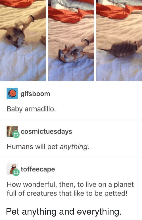 Live, Baby, and How: gifsboorm  Baby armadillo  cosmictuesdays  Humans will pet anything.  toffeecape  How wonderful, then, to live on a planet  full of creatures that like to be petted! <p>Pet anything and everything.</p>