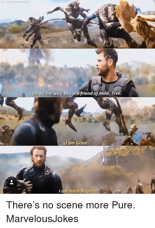 Memes, Tree, and 🤖: GImylifelstheavengers  Oh by the way, this is a friend of mine. Tree.  I am Groot.  I am Steve Rogers There's no scene more Pure. MarvelousJokes