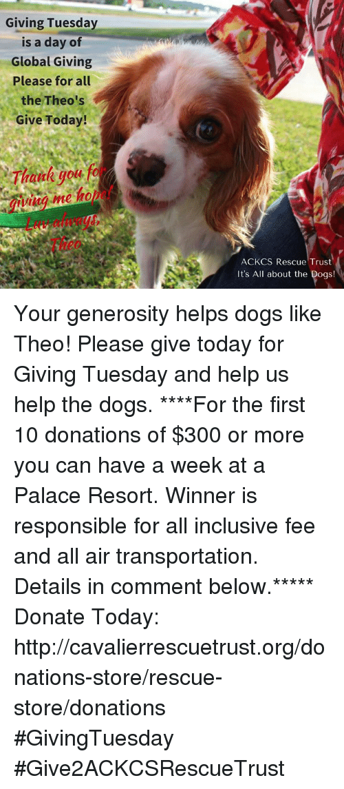 Helping Dog: Giving Tuesday  is a day of  Global Giving  Please for all  the Theo's  Give Today!  eme ho  ACKCS Rescue Trust  It's All about the Dogs! Your generosity helps dogs like Theo! Please give today for Giving Tuesday and help us help the dogs. ****For the first 10 donations of $300 or more you can have a week at a Palace Resort. Winner is responsible for all inclusive fee and all air transportation. Details in comment below.*****  Donate Today: http://cavalierrescuetrust.org/donations-store/rescue-store/donations #GivingTuesday #Give2ACKCSRescueTrust