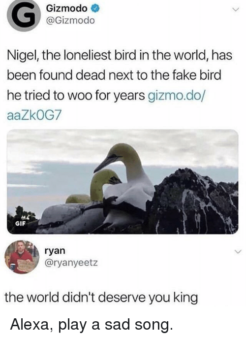 Fake, Gif, and Gizmodo: Gizmodo  @Gizmodo  Nigel, the loneliest bird in the world, has  been found dead next to the fake birc  he tried to woo for years gizmo.do/  aaZkOG7  GIF  ryan  @ryanyeetz  the world didn't deserve you king Alexa, play a sad song.