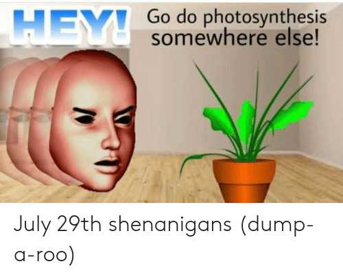 roo: Go do photosynthesis  somewhere else!  HEY July 29th shenanigans (dump-a-roo)