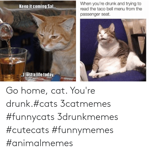 Youre Drunk: Go home, cat. You're drunk.#cats 3catmemes #funnycats 3drunkmemes #cutecats #funnymemes #animalmemes