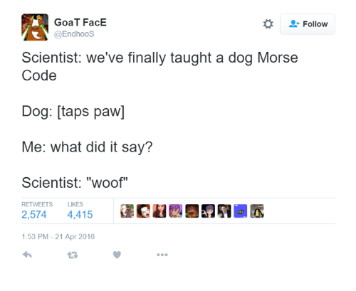 """Woofe: GoaT FacE  @Endhoos  Follow  Scientist: we've finally taught a dog Morse  Code  Dog: [taps paw]  Me: what did it say?  Scientist: """"woof""""  RETWEETS  LIKES  2,574 4,415  @民鵯..  :53 PM-21 Apr 2016"""
