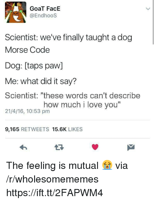"""morse code: GoaT FacE  @EndhooS  Scientist: we've finally taught a dog  Morse Code  Dog: [taps paw]  Me: what did it say?  Scientist: """"these words can't describe  21/4/16, 10:53 pm  how much i love you  I1  9,165 RETWEETS 15.6K LIKES The feeling is mutual 😭 via /r/wholesomememes https://ift.tt/2FAPWM4"""