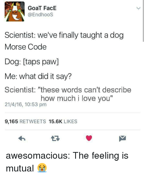 """morse code: GoaT FacE  @EndhooS  Scientist: we've finally taught a dog  Morse Code  Dog: [taps paw]  Me: what did it say?  Scientist: """"these words can't describe  21/4/16, 10:53 pm  how much i love you  I1  9,165 RETWEETS 15.6K LIKES awesomacious:  The feeling is mutual 😭"""