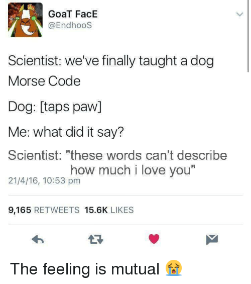 """morse code: GoaT FacE  @EndhooS  Scientist: we've finally taught a dog  Morse Code  Dog: [taps paw]  Me: what did it say?  Scientist: """"these words can't describe  21/4/16, 10:53 pm  how much i love you  I1  9,165 RETWEETS 15.6K LIKES The feeling is mutual 😭"""