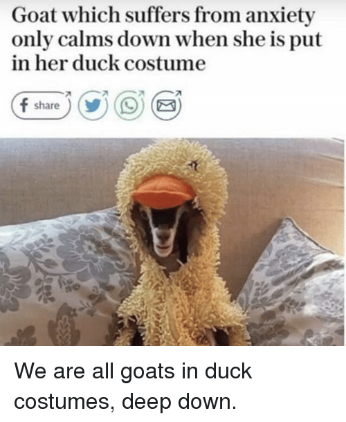 Goat, Anxiety, and Duck: Goat which suffers from anxiety  only calms down when she is put  in her duck costume  f share))OE We are all goats in duck costumes, deep down.
