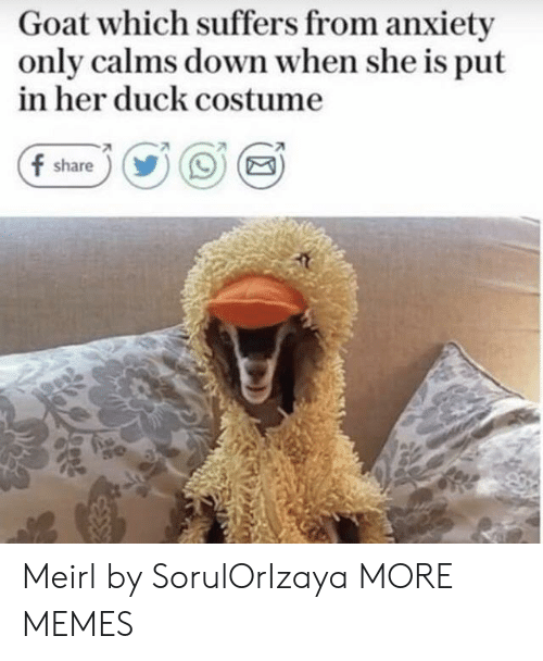 Dank, Memes, and Target: Goat which suffers from anxiety  only calms down when she is put  in her duck costume  f share))OE Meirl by SorulOrIzaya MORE MEMES
