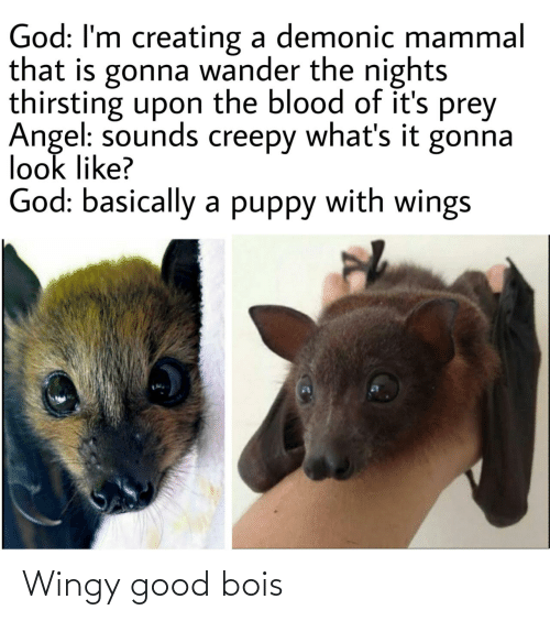 Wings: God: I'm creating a demonic mammal  that is gonna wander the nights  thirsting upon the blood of it's prey  Angel: sounds creepy what's it gonna  look like?  God: basically a puppy with wings Wingy good bois