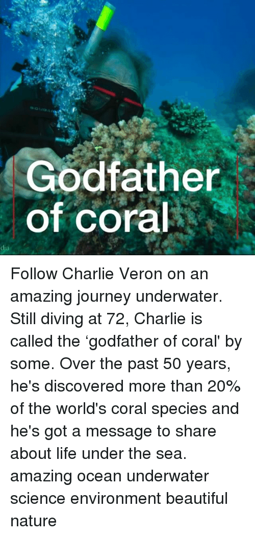 Beautiful, Charlie, and Journey: Godfather  of coral  dia Follow Charlie Veron on an amazing journey underwater. Still diving at 72, Charlie is called the 'godfather of coral' by some. Over the past 50 years, he's discovered more than 20% of the world's coral species and he's got a message to share about life under the sea. amazing ocean underwater science environment beautiful nature