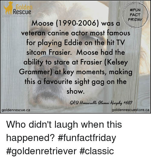 Friday, Memes, and Gru: Golden  Rescue  #FUN  FACT  FRIDAY  Moose (1990-2006) was a  for playing Eddie on the hit TV  ability to stare at Frasier (Kelsey  veteran canine actor most famous  sitcom Frasier. Moose had the  Grammer) at key moments, making  this a favourite sight gag on the  show.  GRU Honoun alle alumni Agophy #683  goldenrescue.ca  goldenrescuestore.ca Who didn't laugh when this happened?   #funfactfriday #goldenretriever #classic