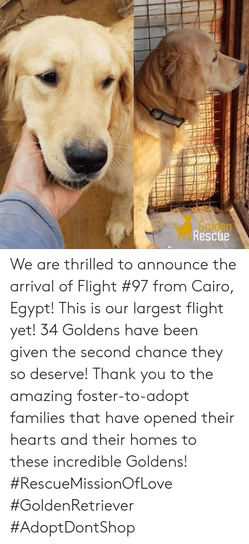 Golden Rescue We Are Thrilled to Announce the Arrival of