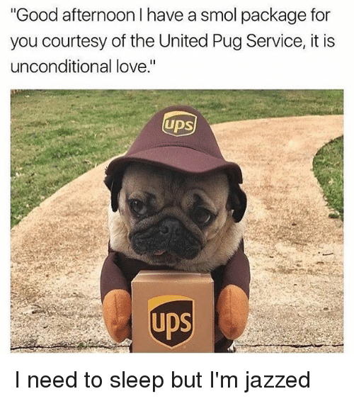 """Pugly: Good afternoon I have a smol package for  you courtesy of the United Pug Service, it is  unconditional love.""""  UDS  UDS I need to sleep but I'm jazzed"""