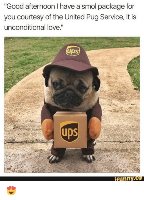 """Pugly: """"Good afternoon I have a smol package for  you courtesy of the United Pug Service, it is  unconditional love.""""  Ups  funny.  腳 😍"""