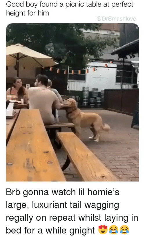 Homie, Memes, and Good: Good boy found a picnic table at perfect  height for him  @DrSmashlove Brb gonna watch lil homie's large, luxuriant tail wagging regally on repeat whilst laying in bed for a while gnight 😍😂😂