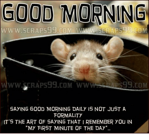 Good Morning Www Seraps59com Wwww Saying Good Morning Daily Is Not