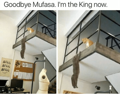 Goodbyee: Goodbye Mufasa. I'm the King now