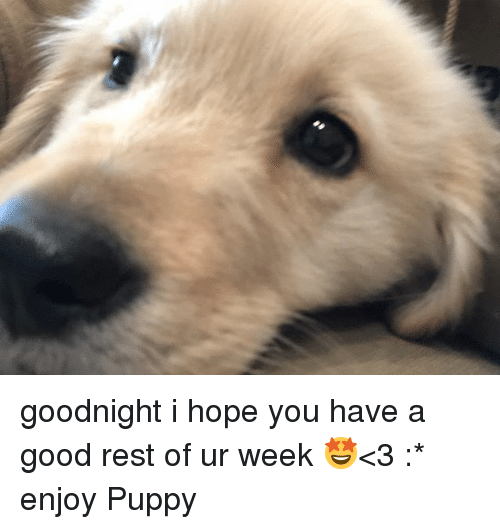 Good, Puppy, and Hope: goodnight i hope you have a good rest of ur week 🤩<3 :* enjoy Puppy