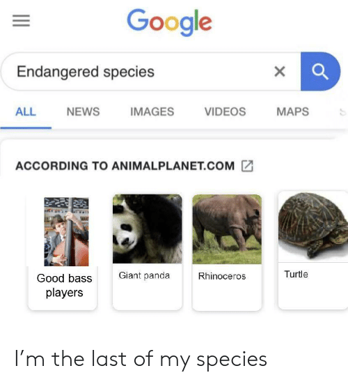 giant panda: Google  Endangered species  IMAGES  VIDEOS  MAPS  ALL  NEWS  ACCORDING TO ANIMALPLANET.COM  Giant panda  Turtle  Rhinoceros  Good bass  players  X I'm the last of my species