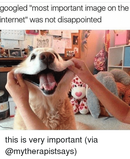"""Disappointed, Internet, and Memes: googled """"most important image on the  internet"""" was not disappointed this is very important (via @mytherapistsays)"""
