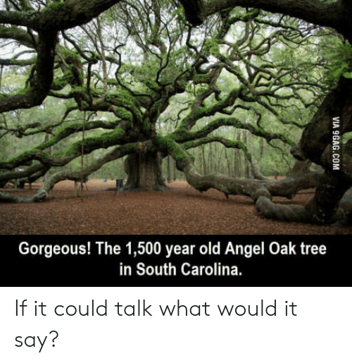 Angeler: Gorgeous! The 1,500 year old Angel Oak tree  in South Carolina. If it could talk what would it say?