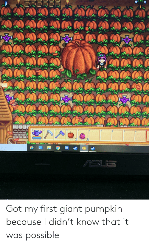 Giant: Got my first giant pumpkin because I didn't know that it was possible