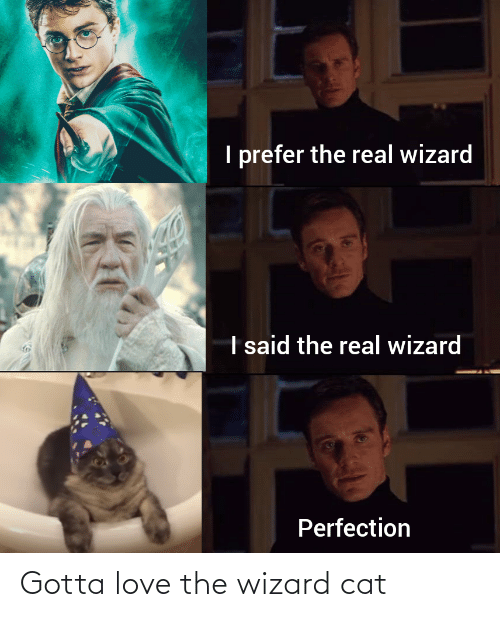wizard: Gotta love the wizard cat