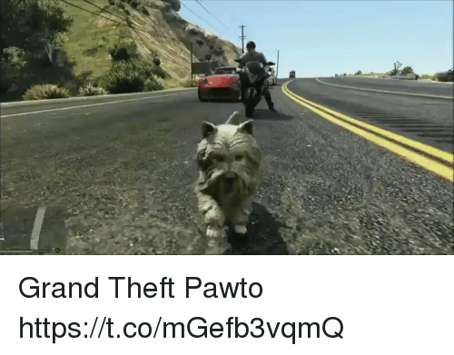 grand theft: Grand Theft Pawto https://t.co/mGefb3vqmQ