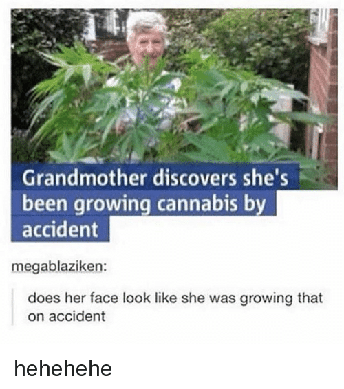 Hehehehe: Grandmother discovers she's  been growing cannabis by  accident  does her face look like she was growing that  on accident hehehehe