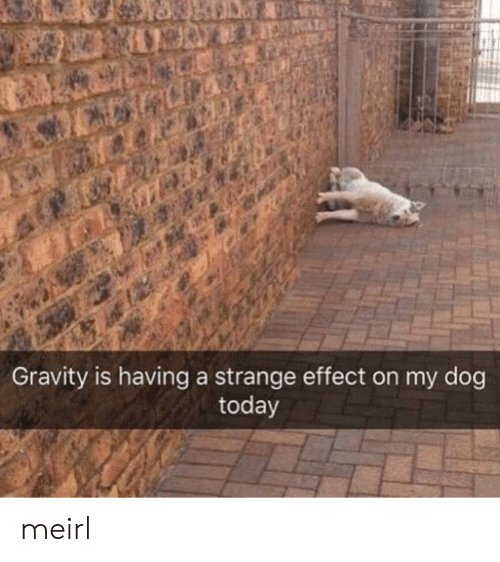 Gravity, Today, and MeIRL: Gravity is having a strange effect on my dog  today meirl