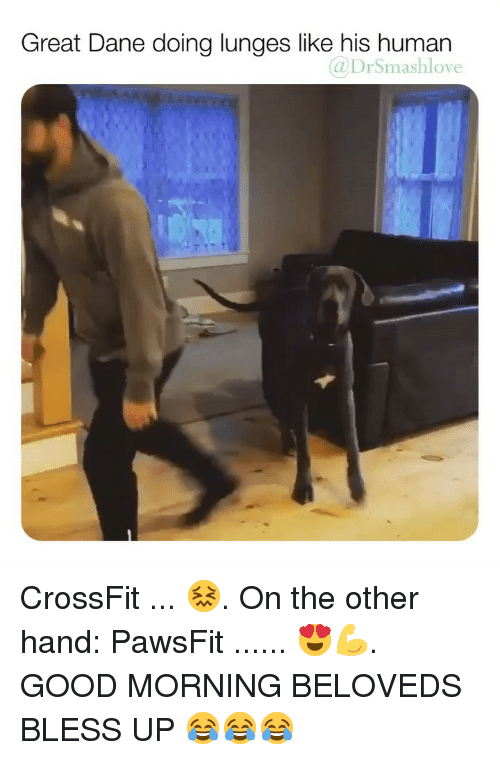 Lunges: Great Dane doing lunges like his human  @DrSmashlove CrossFit ... 😖. On the other hand: PawsFit ...... 😍💪. GOOD MORNING BELOVEDS BLESS UP 😂😂😂