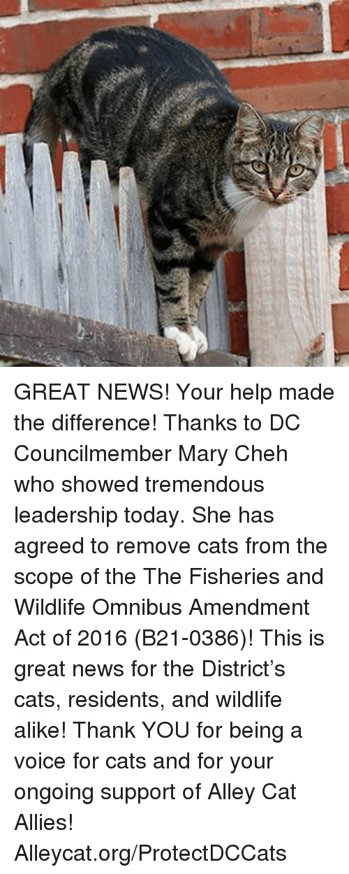 alley cats: GREAT NEWS! Your help made the difference! Thanks to DC Councilmember Mary Cheh who showed tremendous leadership today. She has agreed to remove cats from the scope of the The Fisheries and Wildlife Omnibus Amendment Act of 2016 (B21-0386)! This is great news for the District's cats, residents, and wildlife alike!  Thank YOU for being a voice for cats and for your ongoing support of Alley Cat Allies! Alleycat.org/ProtectDCCats