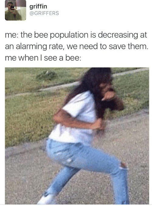 Alarming, Griffin, and Bee: griffin  @GRIFFERS  me: the bee population is decreasing at  an alarming rate, we need to save them.  me when I see a bee