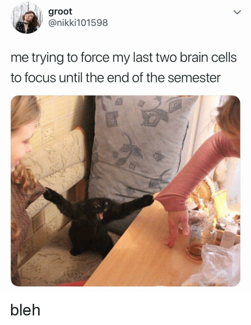 Brain, Focus, and Relatable: groot  @nikki101598  me trying to force my last two brain cells  to focus until the end of the semester bleh