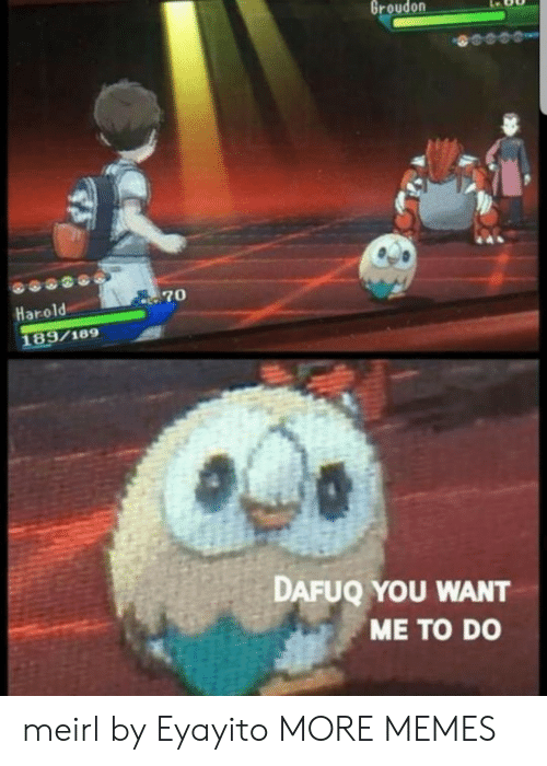 Dank, Memes, and Target: Groudon  70  Harold  189/189  DAFUQ YOU WANT  ME TO DO meirl by Eyayito MORE MEMES