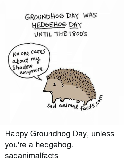 no-one-care: GROUNDHOG DAY WAS  HEDGEHOG DAY  UNTIL THE 1800s  No one cares  about my  ore  anym  sad animal facts Happy Groundhog Day, unless you're a hedgehog. sadanimalfacts