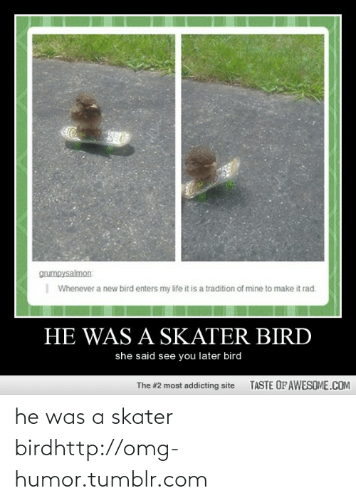 Taste Of Awesome: grumpysalmon:    Whenever a new bird enters my life it is a tradition of mine to make it rad.  HE WAS A SKATER BIRD  she said see you later bird  TASTE OF AWESOME.COM  The #2 most addicting site he was a skater birdhttp://omg-humor.tumblr.com
