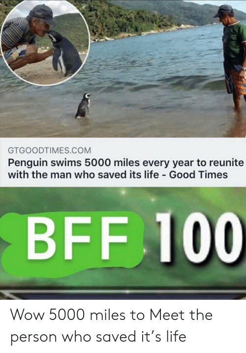 Penguin: GTGOODTIMES.COM  Penguin swims 5000 miles every year to reunite  with the man who saved its life Good Times  BFF 100 Wow 5000 miles to Meet the person who saved it's life
