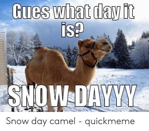 Funny Snow Memes: Gues what day it  ISA  SNOW DAYVM Snow day camel - quickmeme