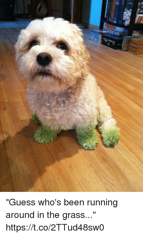 """Grasse: """"Guess who's been running around in the grass..."""" https://t.co/2TTud48sw0"""