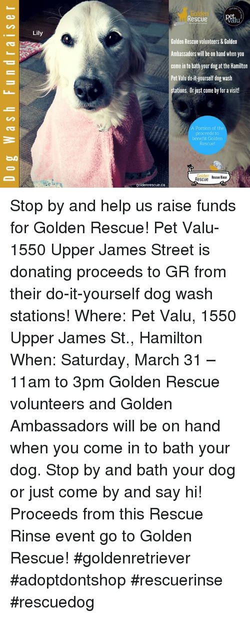 Gulden rescue alu lily golden rescue volunteers golden rescue alu lily golden rescue volunteers golden ambassadors will be on hand when you come in to bath your dog at the hamilton pet valu do it yourself solutioingenieria
