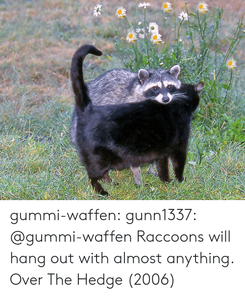 gummi: gummi-waffen:  gunn1337:  @gummi-waffen   Raccoons will hang out with almost anything.   Over The Hedge (2006)