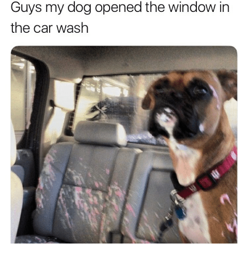 Car Wash, Dog, and Car: Guys my dog opened the window in  the car wash
